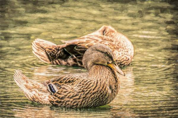 Photograph - Headless Honey Duck Toned by Don Northup
