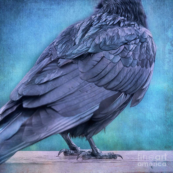 Wall Art - Photograph - Headless Raven by Priska Wettstein