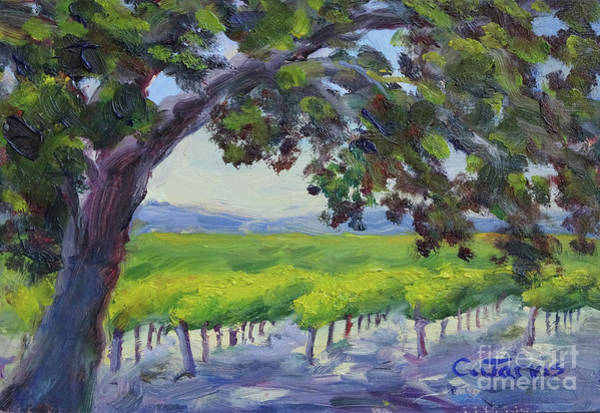 Painting - Healdsburg Vineyard by Carolyn Jarvis