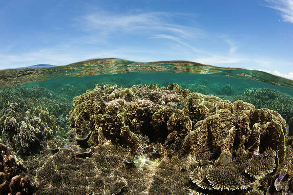 Hard Rock Photograph - Healthy Corals Living Near The Oceans by Stephen Frink
