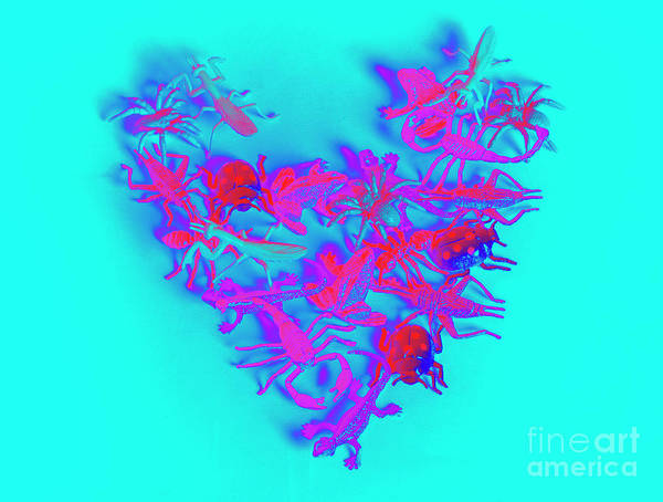 Blue Heart Wall Art - Photograph - Heart Of The Wild by Jorgo Photography - Wall Art Gallery
