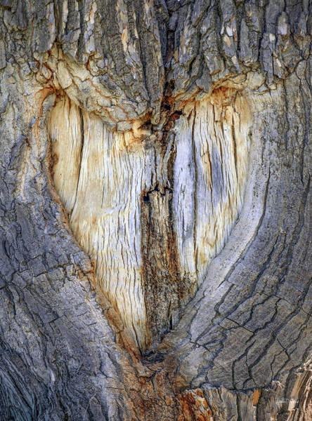 Photograph - Heart Tree by Leland D Howard