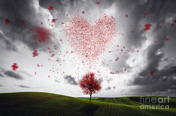 Wall Art - Photograph - Hearth Shape Made Of Flying Red Leaves Falling From The Tree by Michal Bednarek