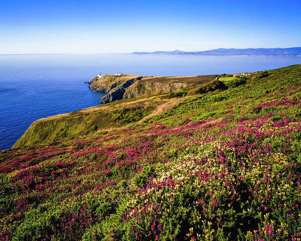 Wall Art - Photograph - Heather On Howth Head, And Dublin Bay by The Irish Image Collection