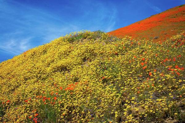 Photograph - Heaven In The High Desert - Superbloom 2019 by Lynn Bauer