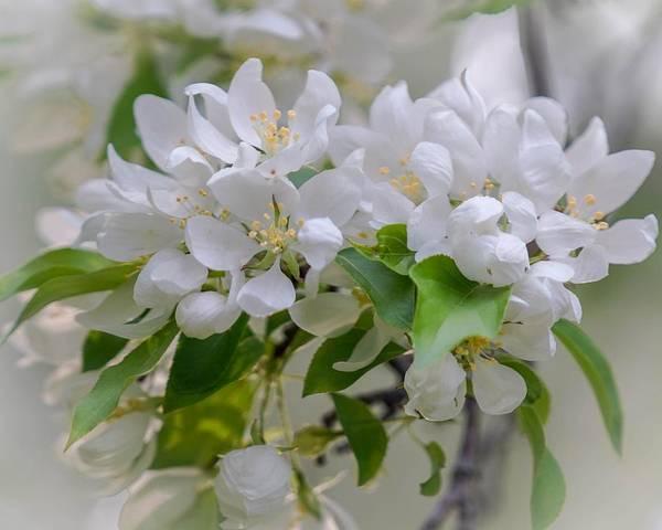 Heavenly Blossoms Art Print