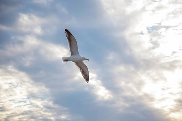 Photograph - Heavenly Gull - Misquamicut Beach by Kirkodd Photography Of New England