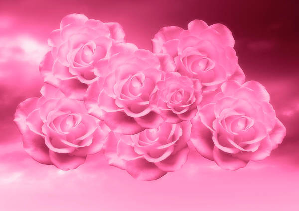 Photograph - Heavenly Pink Red Roses by Johanna Hurmerinta