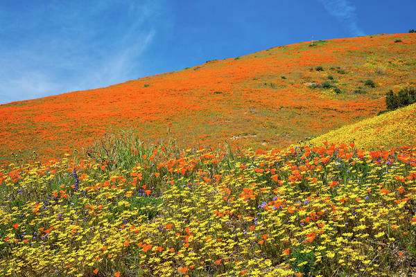 Photograph - Heavenly Wonders Of The 2019 Wildflower Superbloom by Lynn Bauer