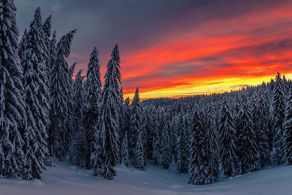 Photograph - Heavens In Flames by Evgeni Dinev