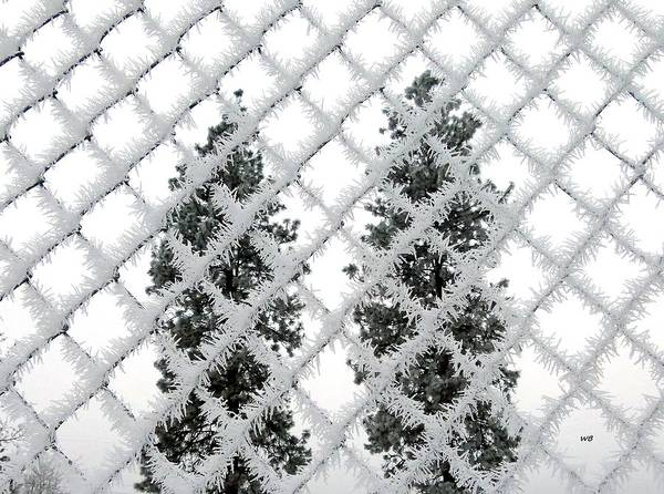 Chain Link Photograph - Heavy Hoarfrost by Will Borden