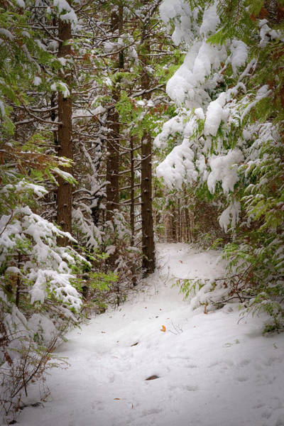 Photograph - Heavy With Snow by David Heilman