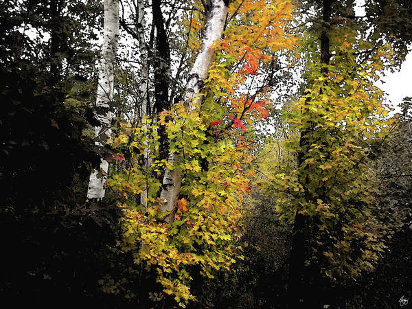 Photograph - Hebron Maple And Birch Slices by Wayne King