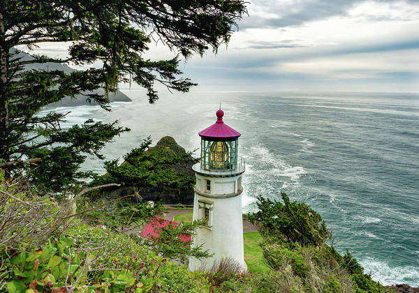 Photograph - Heceta Head 2018 Lighthouse 2 by Lara Ellis