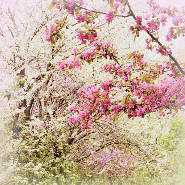 Wall Art - Photograph - The Fleeting Nature Of Blossoms by Jessica Jenney