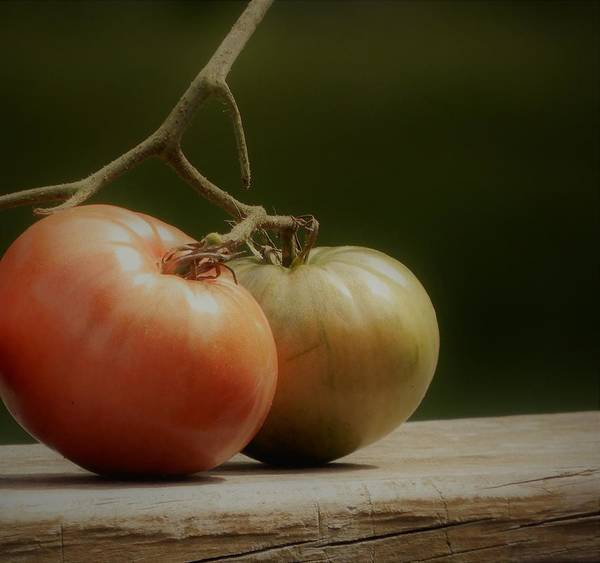 Photograph - Heirloom Two Tomatoes by Tina M Wenger
