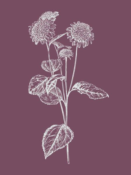 Love Mixed Media - Helianthus Purple Flower by Naxart Studio