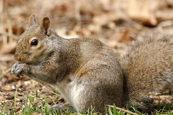 Photograph - Hello Squirrel by Don Northup