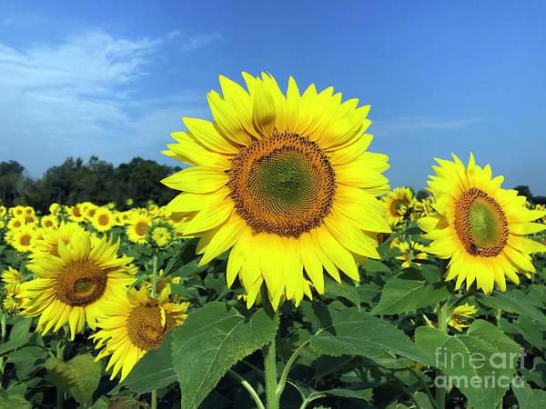 Loving Photograph - Hello Sunshine by Jon Neidert