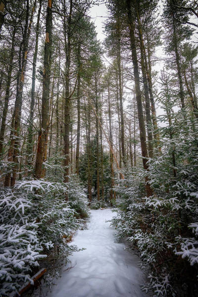 Hemlock Photograph - Hemlock Forest Freeport Maine by Rick Berk