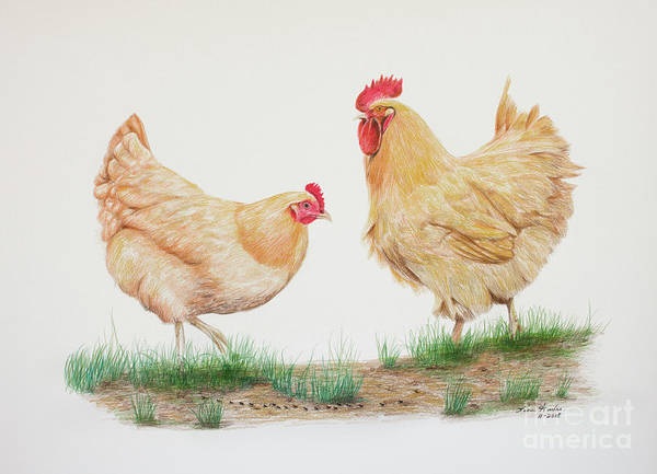 Wall Art - Drawing - Hen And Rooster by Lena Auxier