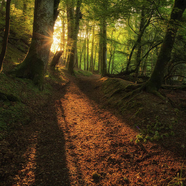 Art Print featuring the photograph Henllan Woods Sunrise by Elliott Coleman