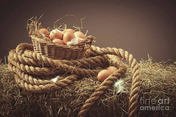 Wall Art - Photograph - Hens Eggs by Amanda Elwell