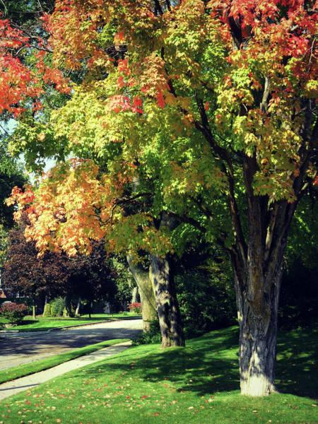 Photograph - Her Beautiful Path Home by Cyryn Fyrcyd