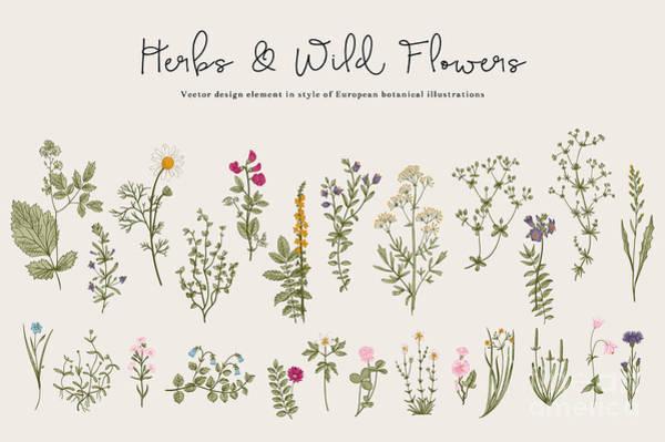 Wall Art - Digital Art - Herbs And Wild Flowers. Botany. Set by Olga Korneeva