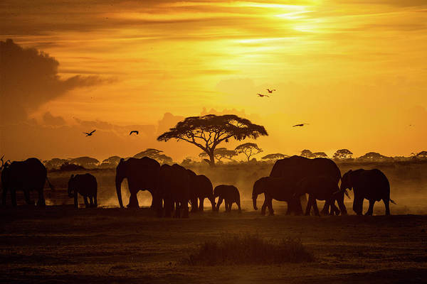 Wall Art - Photograph - Sunset In Amboseli by Susan Schmitz