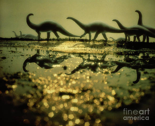 Photograph - Herd Of Brontosaurus by Warren Photographic