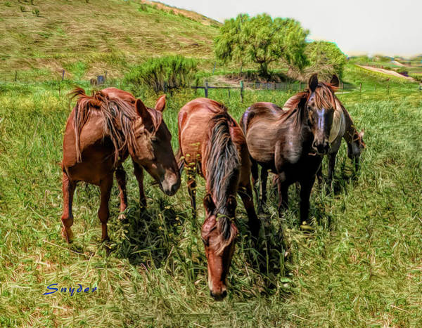 Photograph - Herd Of Four Wild Horses by Floyd Snyder