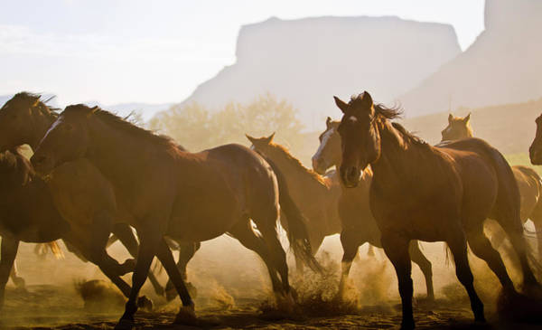 Herd Of Horses Wall Art - Photograph - Herd Of Horses Running In Utah Desert by Tyler Stableford