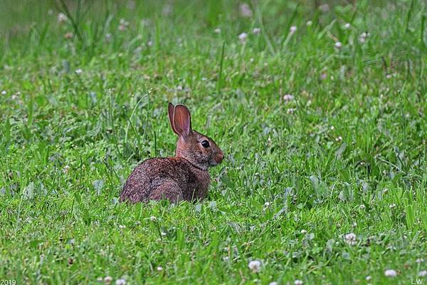 Photograph - Here Comes Peter Cottontail by Lisa Wooten