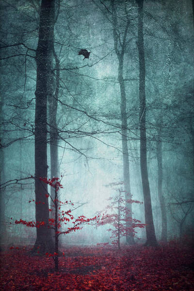 Photograph - Here Comes The Fear - Fall Forest In Fog by Dirk Wuestenhagen