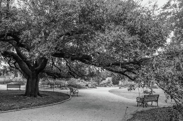 Photograph - Hermann Park Black And White by Dan Sproul