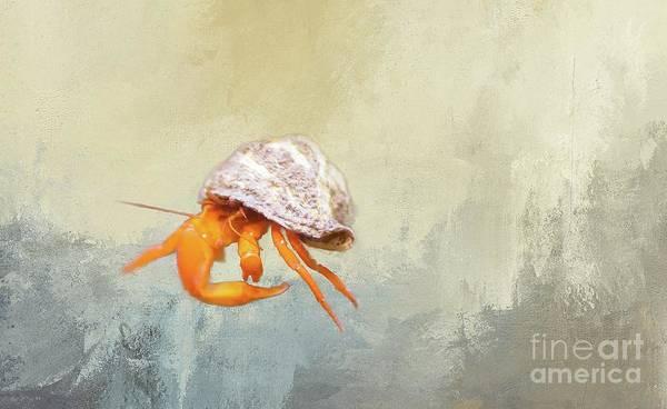 Photograph - Hermit Crab by Eva Lechner
