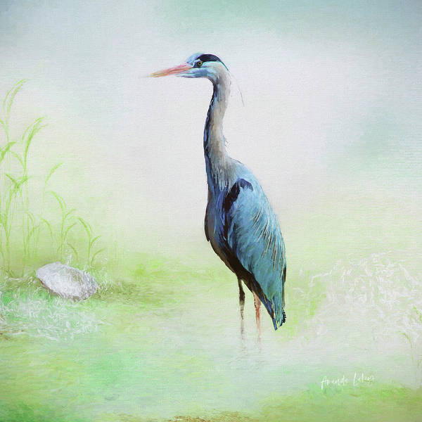 Bird Watercolor Mixed Media - Heron by Amanda Lakey