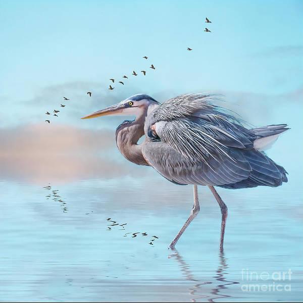 Photograph - Heron At Sunrise by Brian Tarr