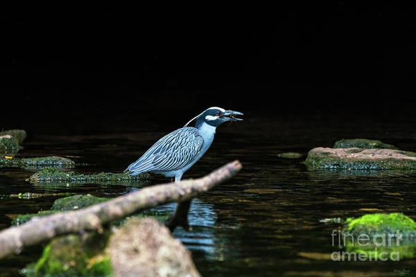 Wall Art - Photograph - Heron Fishing Success by Jennifer White