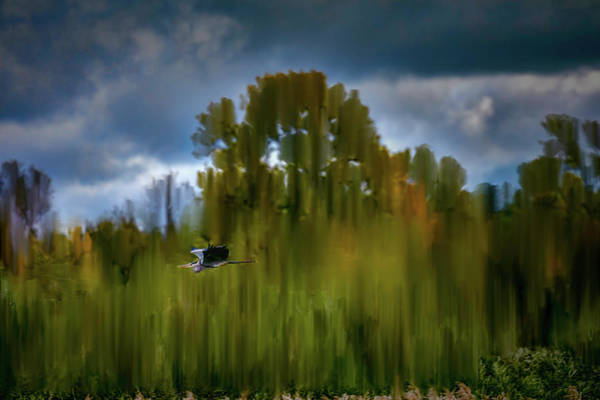 Photograph - Heron Flying Abstract #h9 by Leif Sohlman