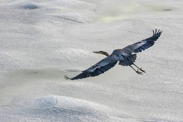 Wall Art - Photograph - Heron In Flight by Linda Eszenyi