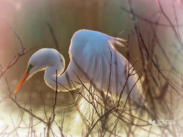 Wall Art - Photograph - Heron In Morning Glow by Denise Winship