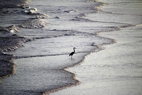 Photograph - Heron On The Beach by Cynthia Guinn