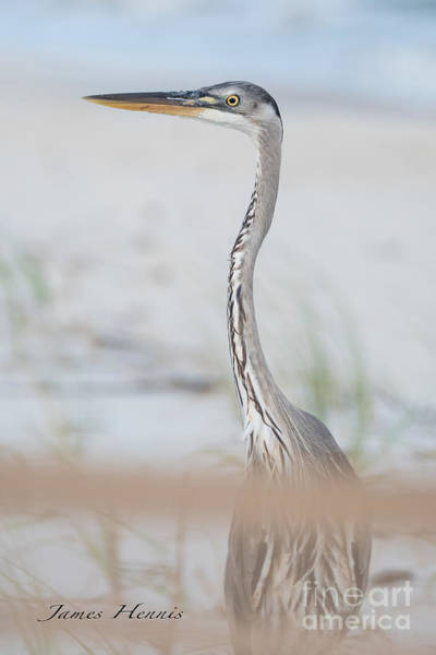 Photograph - Heron On The Island by James Hennis
