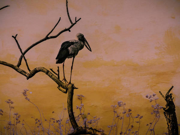 Photograph - Heron Watching Sunset by AE collections