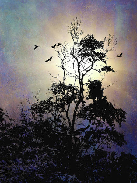 Photograph - Herons At Dusk by Reynaldo Williams