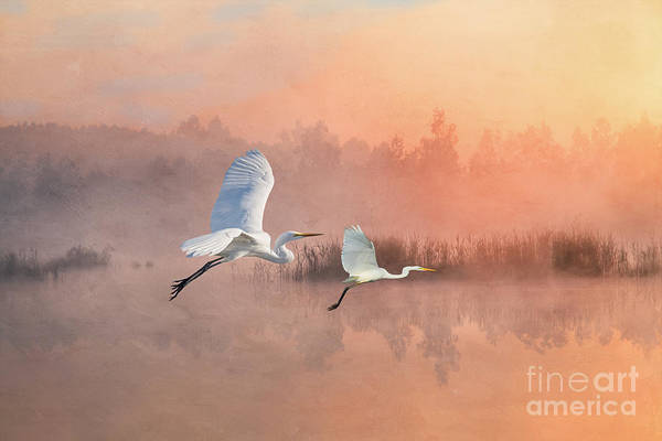 Wall Art - Photograph - Herons Into The Sunset by Laura D Young