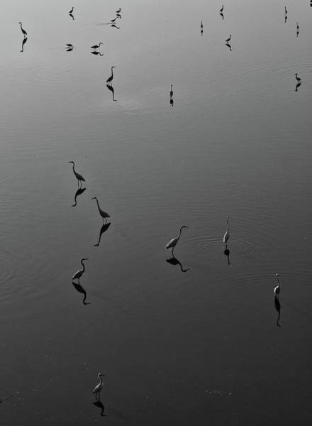 Photograph - Herons On Lake 367 In Black And White by Wesley Elsberry