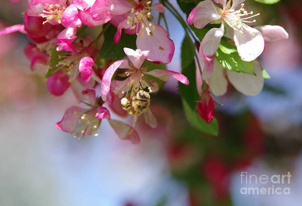 Wall Art - Photograph - Beautiful Buzzy Busyness by Jeff Swan